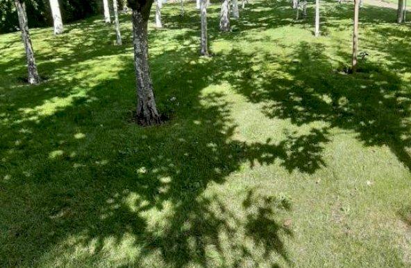 NOU | Teren Impecabil 957 mp | Zona Otopeni Central
