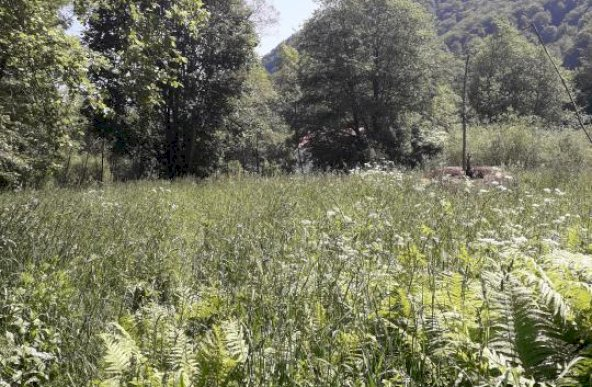Teren extravilan 10.246 mp, Rusca, Jud. Caras-Severin